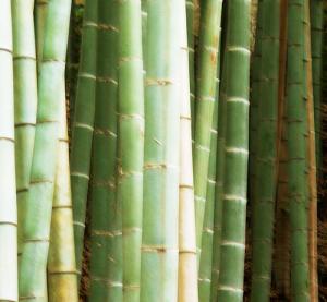 Одежда из бамбука, интересное направление бизнеса с Вьетнамом