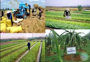 Растениеводство и Животноводство во Вьетнаме